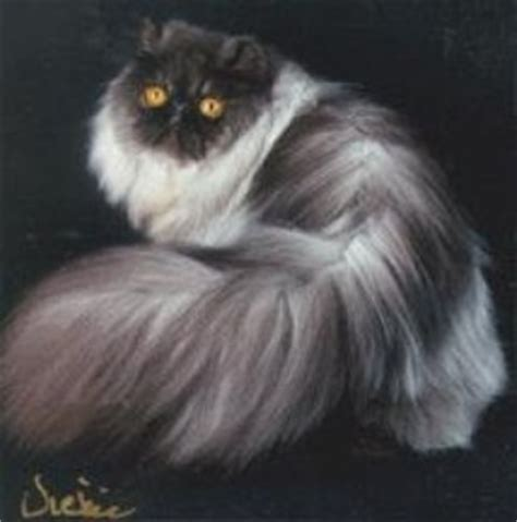 smoke persians breeders picture 1