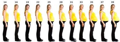 Fetus weight gain in 3rd trimester picture 2