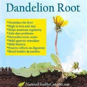 dandelion for health picture 10