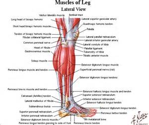 diagnosis of muscle pain in legs picture 17