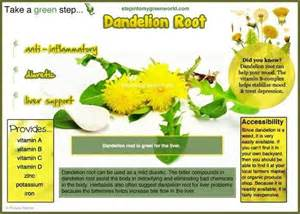 dandelion root tea benefits picture 15