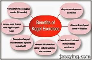 kegel muscle picture 7