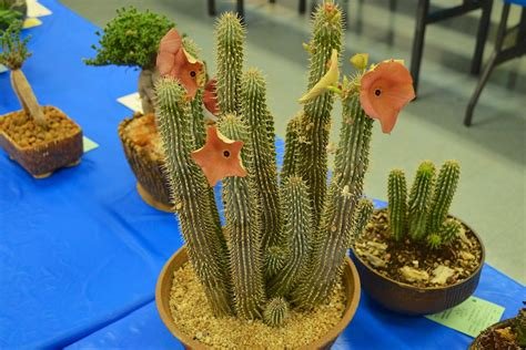 which hoodia is better picture 2