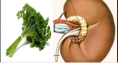 what herb cleanse your penis picture 7