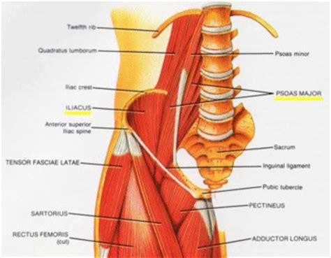 iliopsoas muscle picture 8