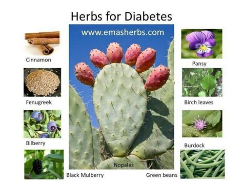 diabetic herbs picture 7