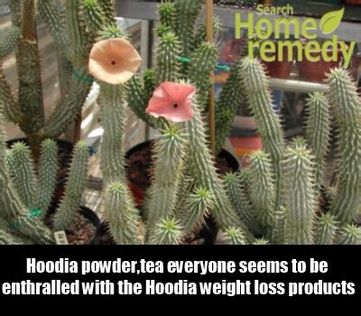 hoodia shortage picture 2