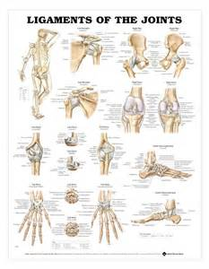 bones and joints picture 14