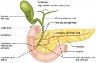 nursing considerations for colon cancer picture 3