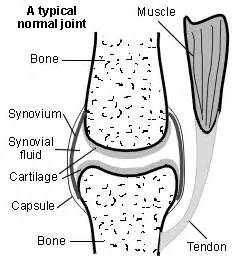 muscle bone and joint center picture 6
