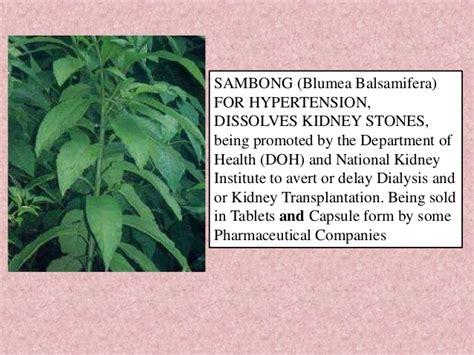 sinta herbal tea picture 3