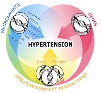 diet pill hypertension picture 19