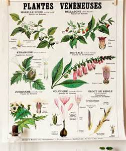 herbal poisons picture 15
