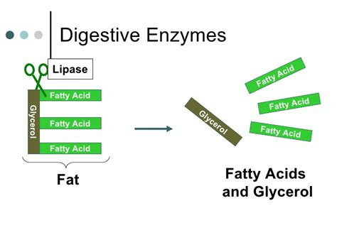 digestion of fat by lipase picture 10