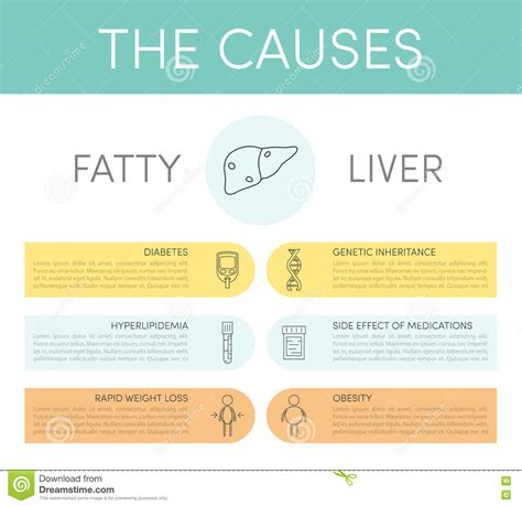causes of a fatty liver picture 18