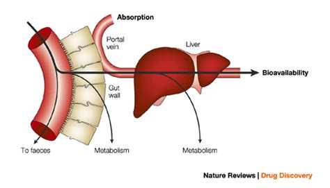 anatomy digestion picture 13