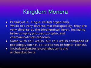 characteristics of fungi kingdom picture 13