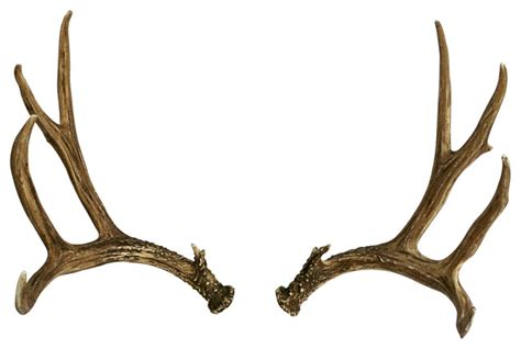 and antler pictures picture 18