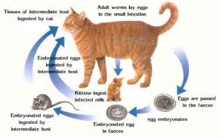 cat worm symptoms picture 1