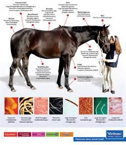 intestinal parasites symptoms picture 7