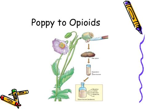 herbal botanical opioid picture 14