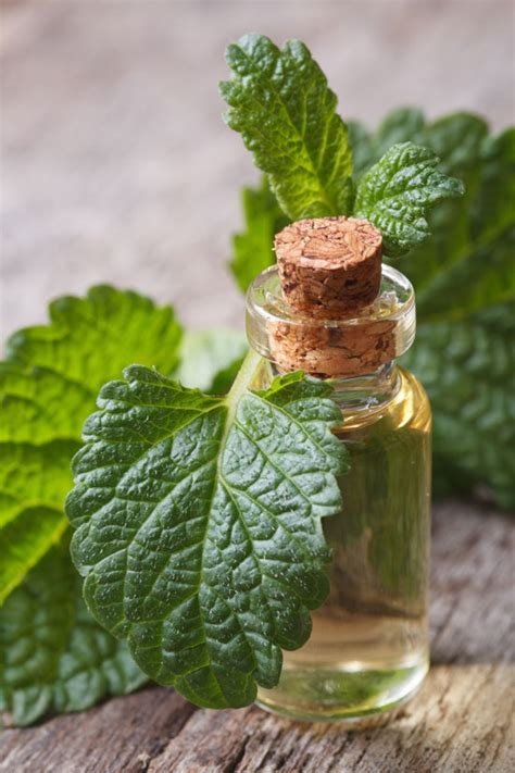 natural tinctures for herpes picture 6