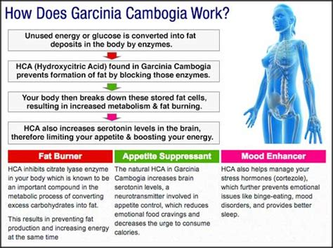 can garcinia cambogia help lose weight with hypothyroid picture 7