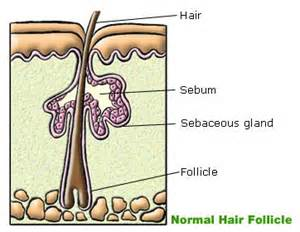 doterra oils to reduce a hair sebaceous cyst picture 5