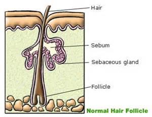 dr. baumann skin type picture 10