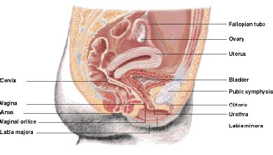 cancer of the body of the uterus during picture 7