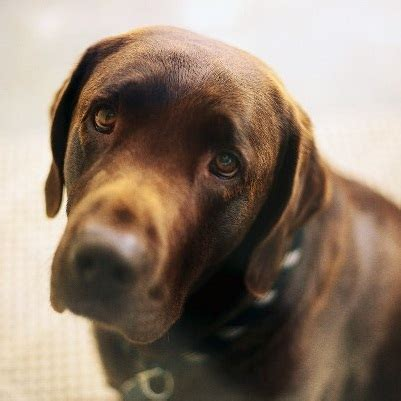 fear in dogs thyroid picture 11