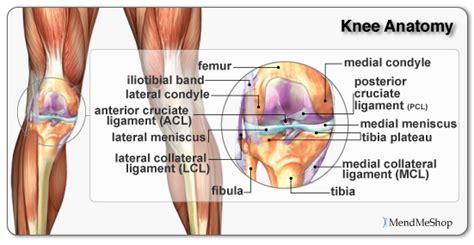 knee joint hot pain re picture 9