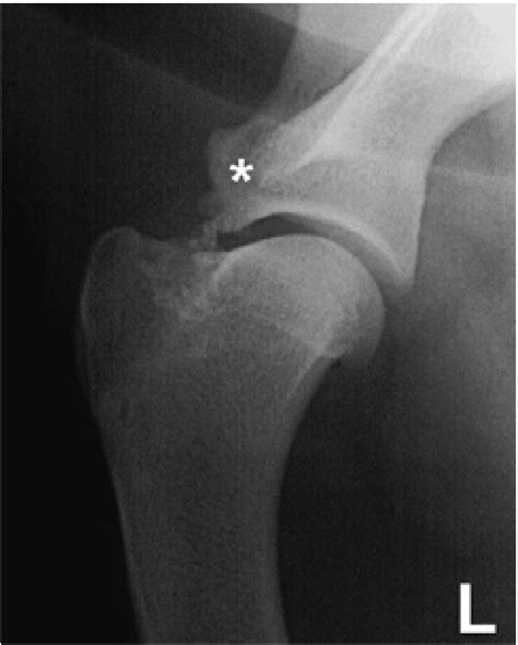 canine bicep joint picture 7