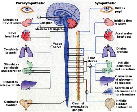 connection between overactive thyroid & overactive bladder picture 1
