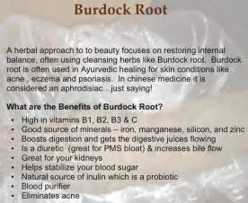 health benefits of burdock picture 5