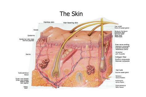 free images of skin picture 10