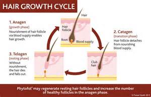 body hair growth rate men diet picture 6