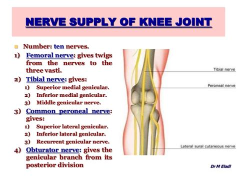 muscles around the knee joint picture 10