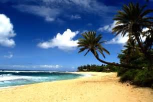 +hawaiin silky herbal picture 9