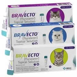 feline pain relief treatments picture 15