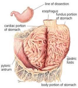 intestinal prefix picture 5
