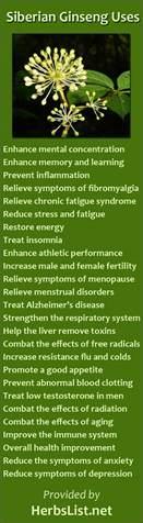 siberian eleuthero health benefits picture 3