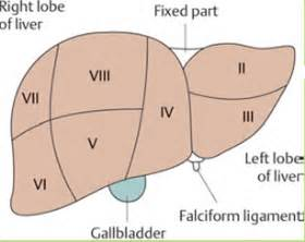 liver segmental anatomy diagram picture 6