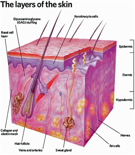 structure of skin modules picture 10