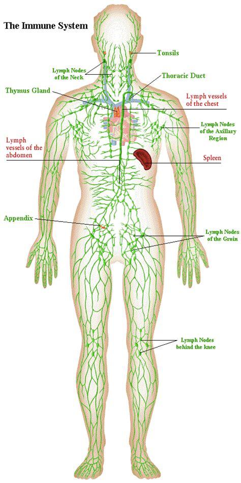 abdominal massage skin picture 7