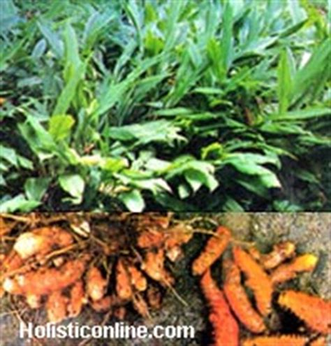 turmeric and liver damage picture 7