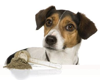probiotics for dogs picture 14