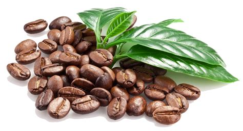 green coffe bean drink picture 9