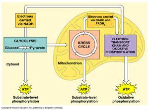 definition microbial food supplements picture 2