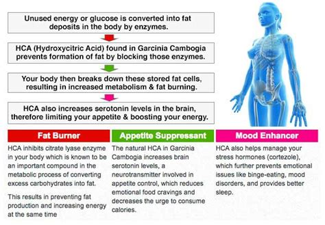what if you take garcinia cambogia and also picture 1
